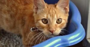 todo-lo-que-necesitas-saber-de-la-bandeja-para-gatos_kzxl7