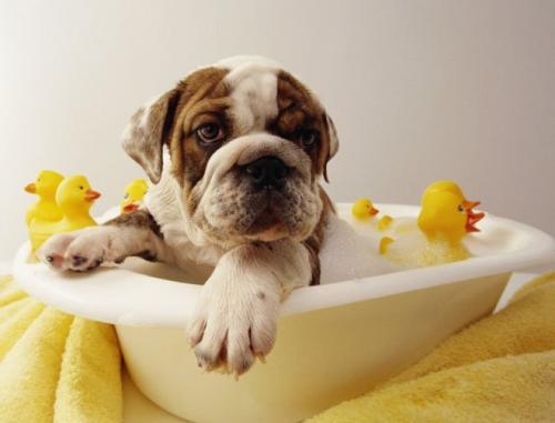 Tres productos básicos para mejorar la higiene del perro