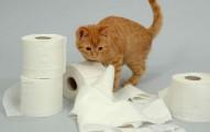 trucos-caseros-para-evitar-que-tu-gato-se-ocupe-donde-juegan-los-ninos_fntw0