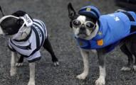 trucos-para-que-el-perro-no-se-asuste-en-halloween_ohgt3