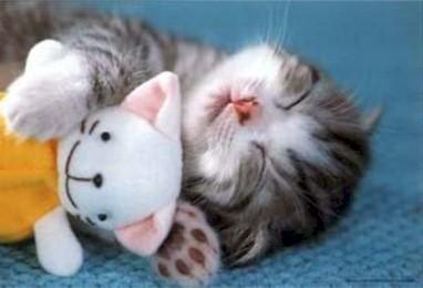 Un gatito bebé en casa