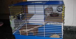 un-mejor-habitat-para-la-chinchilla_06ozf