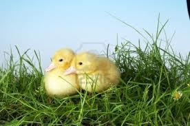 un-pato-en-el-jardin_jluha