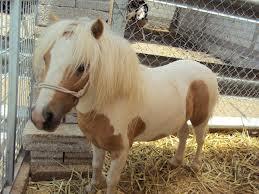 Un poni en casa canal mascotas for Jardines de poni
