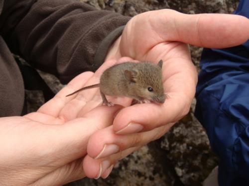 Un ratón en casa