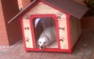 una-casa-ecologica-para-nuestro-perro_z85oc