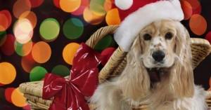 una-mascota-por-navidad_lbv8s