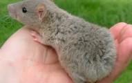 una-rata-en-casa_39q1l