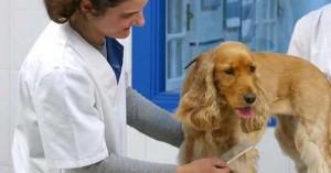 ventajas-de-las-peluquerias-caninas_n7tid