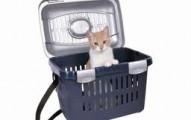 viajando-con-un-gato_avnxz