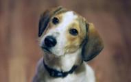 visita-de-otros-perros-a-tu-hogar_ef198