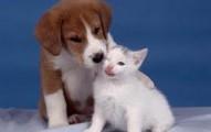 viviendo-en-armonia-con-perros-y-gatos_ud7cx